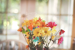 (Donna Irene.) Tags: lighting morning flowers light color kitchen happy focus bright bokeh depthoffield canon50mm14 donnairene