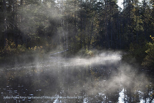 Foggy autumnal river bank at a Finnish nature reserve