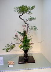 Huge Ikenobo arrangement with pine (Otomodachi) Tags: flowers japan japanese ikebana exhibition event exposition osaka bloemen flowerarrangement takashimaya expositie tentoonstelling flowerarranging bloemschikken ikenobo 550thanniversary ikebanasociety