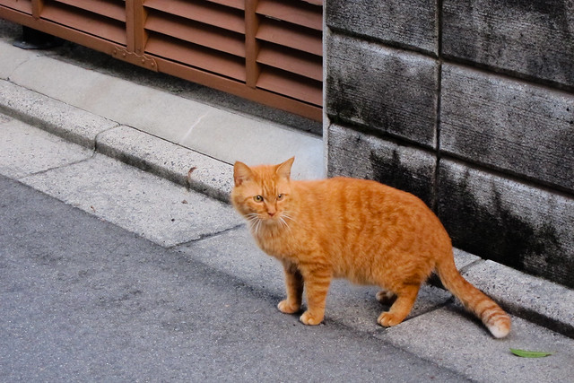 Today's Cat@2012-03-09