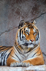 Tigre siberiana - Bioparco di Roma (Massimo Greco _Foligno Thanks for 250,000 + views) Tags: thegalaxy blinkagain photographyforrecreation bestofblinkwinners blinkagainsuperstars blinksuperstars transeguzkilore allofnatureswildlifelevel1 allofnatureswildlifelevel2 allofnatureswildlifelevel3 allofnatureswildlifelevel4 highqualityanimals allofnatureswildlifelevel5 blinkagainfoundinsecondchancethread allofnatureswildlifelevel8 allofnatureswildlifelevel6 allofnatureswildlifelevel7 iloveallofnatureswildlifelevel2