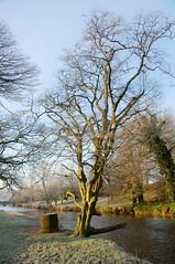 Tree by River Kelvin (RCB4J) Tags: morning winter tree nature frost riverkelvin naturethroughthelens sonyafdt18250mmf3563 sonyslta55v ronniebarron rcb4j