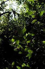Miralfiore (Aria92) Tags: park sky italy parco nature leaf italia details natura cielo land trunk foglia dettagli terra tronco pesaro miralfiore mygearandme
