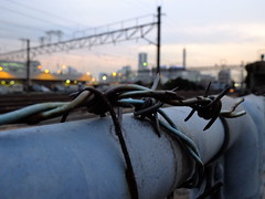 points and lines (owenfinn16) Tags: macro japan twilight dusk barbedwire yokohama