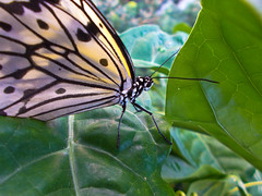 Nikon Coolpix L26 (Krup Photography) Tags: macro nature up butterfly nikon close coolpix pointandshoot inexpensive l26