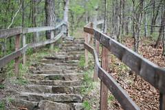 365/19 - stone staircase (thisemily) Tags: stairs spring woods iowa trail 365 railing 50mmf18 butstill ledgesstatepark stonestaircase project365 itsnice thestaircaseshereremindmeofnewhampshiretrails excepttheserockswereprobablybroughtinfromelsewhere andthestairsdidntgoupformilesandmilesandmiles