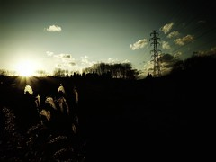 sunset time (*suika *) Tags: winter sunset pylon ricoh bleachbypass grd4 underkey compactcameralover walkingwithgrd4 rustyjapanesepampasgrass