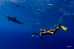 (SARA LEE) Tags: ocean blue sea woman swimming hawaii paradise underwater dolphin dolphins bigisland spinner sarahlee