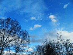 Trees, Sky, Clouds (LostMyHeadache: Absolutely Free *) Tags: trees sky nature silhouette clouds spring nikon day peace cloudy msm davidsmith calgaryalbertacanada