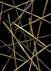 53922 Sedum telephium 'Autumn Joy' (horticultural art) Tags: stems horticulture sedum autumnjoy sedumtelephiumautumnjoy horticulturalart
