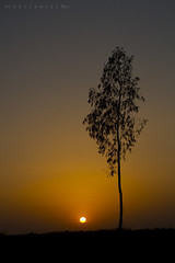 The sun and the Tree (Rhivu_Ray) Tags: life travel sunset sun india tree nature beauty canon spring asia 7d photoart bengal bangla 2012 westbengal febraury rangamati kharagpur canonef50mmf18ii eos7d canoneos7d canon7d paschimbanga rhivu hijliforest rhitamvarray rhitamvarsphotoart thesunandthetree