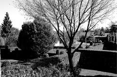 (Jannike Pharasyn) Tags: tree green home garden private landscape border boom tuin haag neighbours borders buren territory priv grens terrein struiken territorium afbakenen