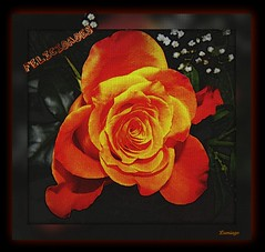 Maite para ti en tu Cumpleaos  (Lumiago) Tags: orange flores textura rosa naranja felicitacin flickraward