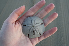 (Blurry Pixels) Tags: beach sand hand dollar