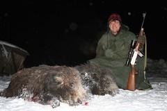 Wild Boar Hunting / Caza del Jabalí