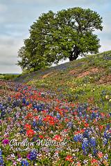 Springtime Color