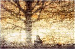 Old Headington wall /2 (FlickrDelusions) Tags: slr film oxford scanning headington minoltaxe1 vivitar24mmf28 minoltadimagedualscaniv boots200colourslidefilm