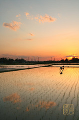 Sunset Rice Planting (Damon Bay) Tags: