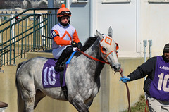 2013-03-22 (206) r7 Yomar Ortiz on #10 Anzio Adam (JLeeFleenor) Tags: horses caballo cheval photography grey photos gray uma cal jockey jinete cavallo cavalo pferd equestrian kuda alogo equine hest thoroughbreds soos hevonen cuddy paard cavall kon koin laurelpark  jokey fantino hst ceffyl  jquei  ko faras hestur  perd ngi  konj    capall beygir yarraman dokej rennreiter  pfeerd   okej kilparatsastaja jocheu     yomaroortiz