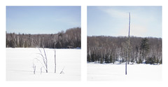 D7 ( CHRISTIAN ) Tags: winter lake snow tree nature forest square 50mm woods nikon focus diptych dof f14 duo hiver lac neige diptyque arbre fort pdc carr