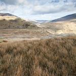Snowdonian Grasses
