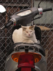scooter cat! (electrofreeze) Tags: cats japan cat kitty scooter kitties nagasaki scootercat