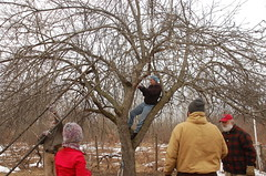 "Apple Pruning Party <a style=""margin-left:10px; font-size:0.8em;"" href=""http://www.flickr.com/photos/91915217@N00/13528529484/"" target=""_blank"">@flickr</a>"