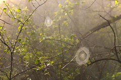 webs (adam.veldhuizen) Tags: park light sun nature sunrise spider state iowa rise spiderwebs webs ledges