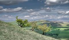 View to South Head (drelliott0net) Tags: life trees england plant tree nature landscape unitedkingdom derbyshire hill gb hdr hawthorn crataegus photomatix chinley