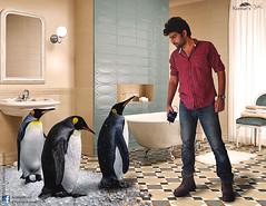 Penguin on floor (Jangra Works) Tags: pet house snow ice look bathroom penguin three warm day floor group creative manipulation human tub bathtub impossible