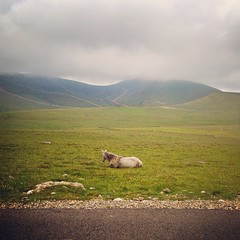 untitled flight (Zora Iuga) Tags: road horse mountain landscape meadow whitehorse mountainrange highmountain