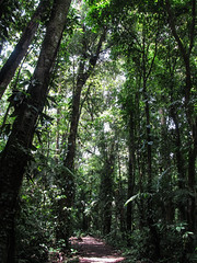 "Parc National Arenal <a style=""margin-left:10px; font-size:0.8em;"" href=""http://www.flickr.com/photos/127723101@N04/26833147721/"" target=""_blank"">@flickr</a>"