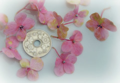Smaller than a coin (Ani Carrington) Tags: pink flowers macro coin mm hmm macromondays