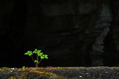 al borde del aljibe (Juan Ig. Llana) Tags: verde planta hojas agua zb euskadi brillante oscuridad jardnbotnico lava santacatalina aljibe trespuentes