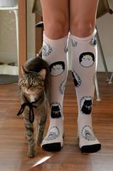 Dizzy Socks (iriskh) Tags: cat dizzy 18200mm nikond5100