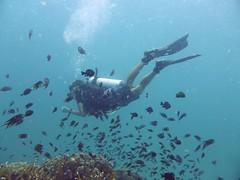 Koh Tao (Scuba Diving), Thailand (Jan-2016) 14-096 (MistyTree Adventures) Tags: ocean sea fish water coral thailand twins marine asia seasia underwater outdoor diving scubadiving diver kohtao gulfofthailand scubadiver panasoniclumix