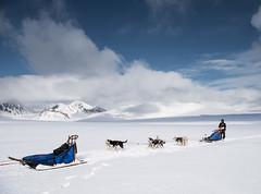 Svalbard 2016-787 (Cal Fraser) Tags: people dog dogs norway svalbard arctic sj sleddog dogteam spitzbergen sledgedog sledgedogs svalbardandjanmayen niklaswikstrand