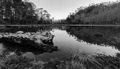 Silence (Camila Mateluna) Tags: bw lake blancoynegro monochrome landscape lago monocromo blackwhite paisaje bn araucania