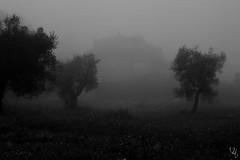 Fog II (VikingAle) Tags: blackandwhite bw white mist black metal fog mood depressive foggyday blackmetal foggydays bwlover