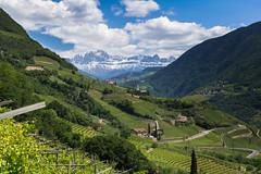 Vineyards of Bolzano (stefanromen) Tags: italien italy mountains nature landscape italia natur vine berge vineyards landschaft sdtirol wein bolzano bozen altoadige southtyrol weinberge stmagdalena lagrein weinfelder