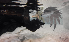 Siren song (CharlotteBoyleMedia) Tags: portrait reflection water fairytale wings underwater ripple surreal bubbles mermaid siren fineartphotography underwaterphotography fineartportraiture