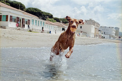 (Benedetta Falugi) Tags: blue sea summer dog love film beach water fuji superia olympus ishootfilm mio amore om1 400iso xtra filmphotography bythesea filmisnotdead shootingfilm istillshootfilm beliveinfilm benedetafalugi