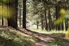 SAM_8951 (Apostol Dragiev) Tags: forest srem samyang samyang8514
