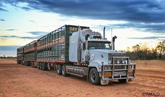 DAVIS OF CLONCURRY TITAN SUNRISE (Paulo660) Tags: kenworth road train cattle livestock truck australia bulls heifer bullock cow cows mack titan