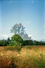 (AirSonka) Tags: summer film field analog 35mm lomo doubleexposure toycamera multipleexposure analogue smena smena8m doubleexposed pelcula lausitz filmphotography pellicule kodakgold200 airsonka doppelbelichtung soniakaniss