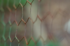 Beside The Chicken Coop-HFF (VarietyHour) Tags: fence wire bokeh outdoor depthoffield