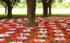 Daisies (Angie NZ) Tags: sculpture aucklandbotanicalgardens