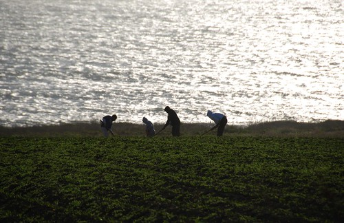 Farmworkers near Pigeon Point