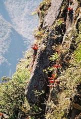 Machu Picchu 2 - 04