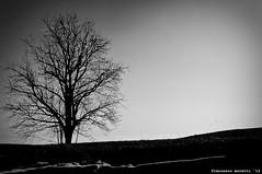 alone waiting springtime (francesco12corde) Tags: trees sunset snow last francesco moretti francesco12corde
